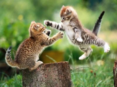 Ni Gato con botas ni Gato de Cheshire: solo GATOS