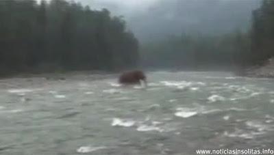 Un hombre filma en Siberia...¿un Mamut?
