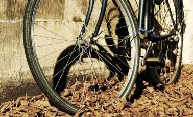 La Bicicleta, mi transporte de todos los días