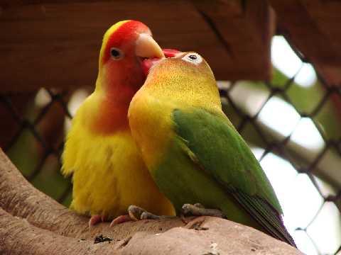 Animales enamorados para toda la vida?