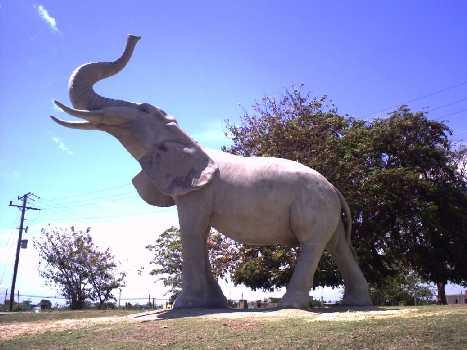 Ya está el elefante en el estadio
